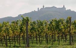 Виноградник Wachau Стоковая Фотография RF