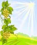 Виноградное вино и сельский ландшафт Стоковые Фотографии RF