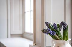 Виноградные гиацинты Стоковая Фотография RF