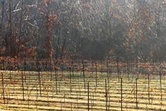 Виноградные лозы пилотной горы Стоковая Фотография RF