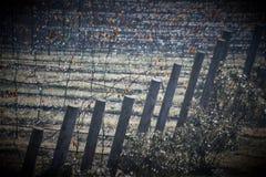 Виноградные лозы пилотной горы Стоковые Фотографии RF