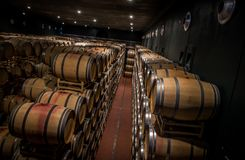 Винодельни Tasso al Guado в Bolgheri, Ливорно, Италии Стоковая Фотография
