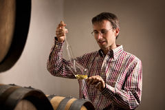 Виноторец беря образец белого вина в погребе. Стоковые Фотографии RF