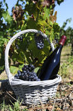 вино бутылки красное Стоковое Изображение RF