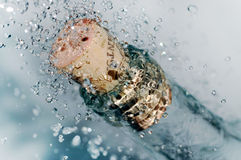 вино бутылки ледистое Стоковое Фото