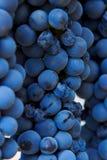 вино виноградника группы виноградин Стоковое Фото
