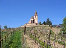 вино виноградника тропки франчуза Стоковые Изображения