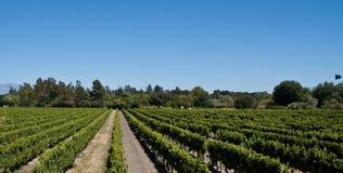 вино виноградника Стоковые Фотографии RF
