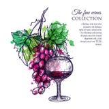 вино виноградины красное бесплатная иллюстрация