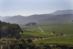 вино долины casablanca Чили стоковое фото rf