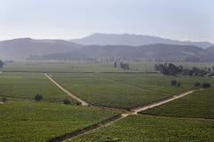 вино долины casablanca Чили стоковые фотографии rf