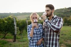 Вино дегустации женщины в винограднике садовода вина Стоковое фото RF