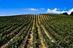 Винодельня Калифорния Стоковые Фото