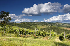 Винодельня Chianti Стоковые Изображения