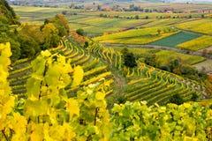 Винодельня Palatinate Стоковые Фото