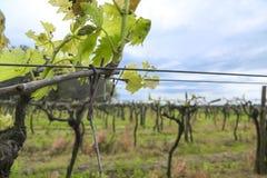 Винодельческая промышленность Стоковые Изображения