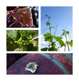 Вино и витикультура Стоковые Изображения RF