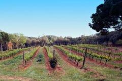 Вино области Испании производящ, лоза fields Стоковые Изображения