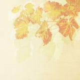вино предпосылки Стоковая Фотография RF