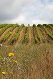 вино продукции burgundy Стоковое Изображение RF