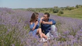 Вино романтичных пар выпивая в поле лаванды видеоматериал