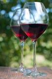 вино стекел 2 сада Стоковое фото RF