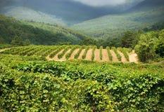 вино страны Стоковые Изображения RF
