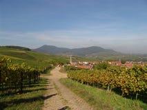 вино страны Стоковое Изображение