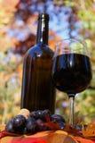 Вино с виноградинами Стоковые Изображения RF