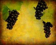 вино ярлыка предпосылки Стоковые Изображения RF