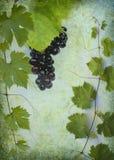 вино ярлыка предпосылки Стоковая Фотография RF