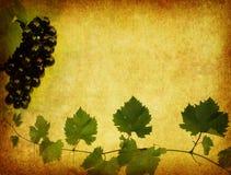 вино ярлыка предпосылки Стоковая Фотография