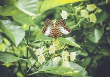 Винтажная бабочка в саде Стоковая Фотография