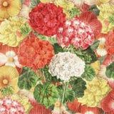 Винтажная ботаническая флористическая предпосылка Стоковое Изображение RF