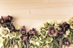 Винтажная весна цветет предпосылка с lenten розами или цветками морозника на древесине Стоковая Фотография RF
