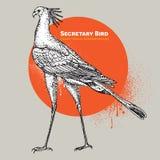 Винтажная гравировка вектора одиночной птицы секретарши бесплатная иллюстрация