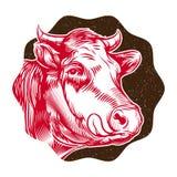 Винтажная иллюстрация намордника коровы Стоковые Изображения RF