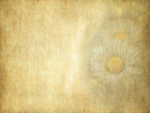 Винтажная карточка праздника маргариток красоты на старой бумаге Стоковое Изображение