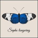 Винтажная карточка с бабочкой Минимальная плоская иллюстрация вектора Sopho longwing Каллиграфия почерка литерности Винтажный или Стоковое фото RF