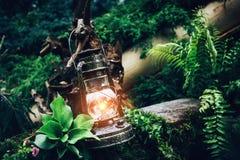 Винтажная лампа фонарика масла керосина горя с мягким теплым светом среди зеленых растений в древесине и лесе Стоковое Фото