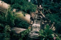 Винтажная лампа фонарика масла керосина среди зеленых растений в древесине и лесе Стоковая Фотография