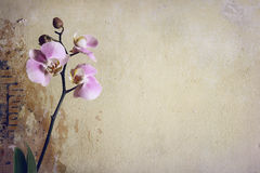 Винтажная орхидея Стоковые Изображения