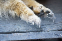 Винтажная предпосылка животного конспекта стиля Стоковые Фото