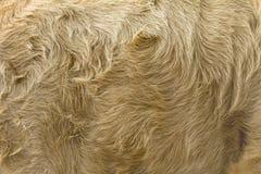 Винтажная предпосылка меха коровы коричневого цвета стиля Стоковое Изображение