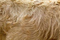Винтажная предпосылка меха коровы коричневого цвета стиля Стоковые Фото