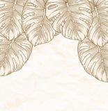 Винтажная предпосылка. Старая скомканная бумага с листьями Monstera с планом в угле. иллюстрация штока