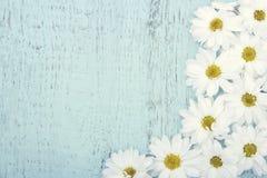 Винтажная предпосылка с белыми маргаритками Стоковое Изображение