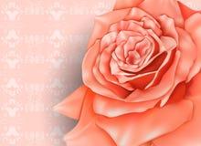 Винтажная предпосылка с красивой розой пастели Стоковое Изображение RF