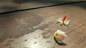Винтажная предпосылка с цветком стоковые фотографии rf