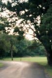 Винтажная предпосылка bokeh от естественного Стоковая Фотография RF